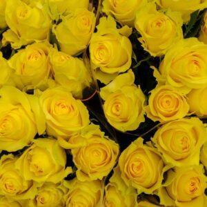 Geltono atspalvio rožės